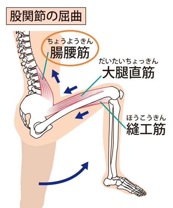 腸腰筋を動かす
