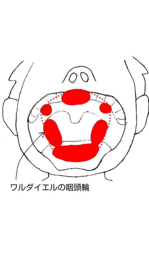 ワルダイエルの咽頭輪