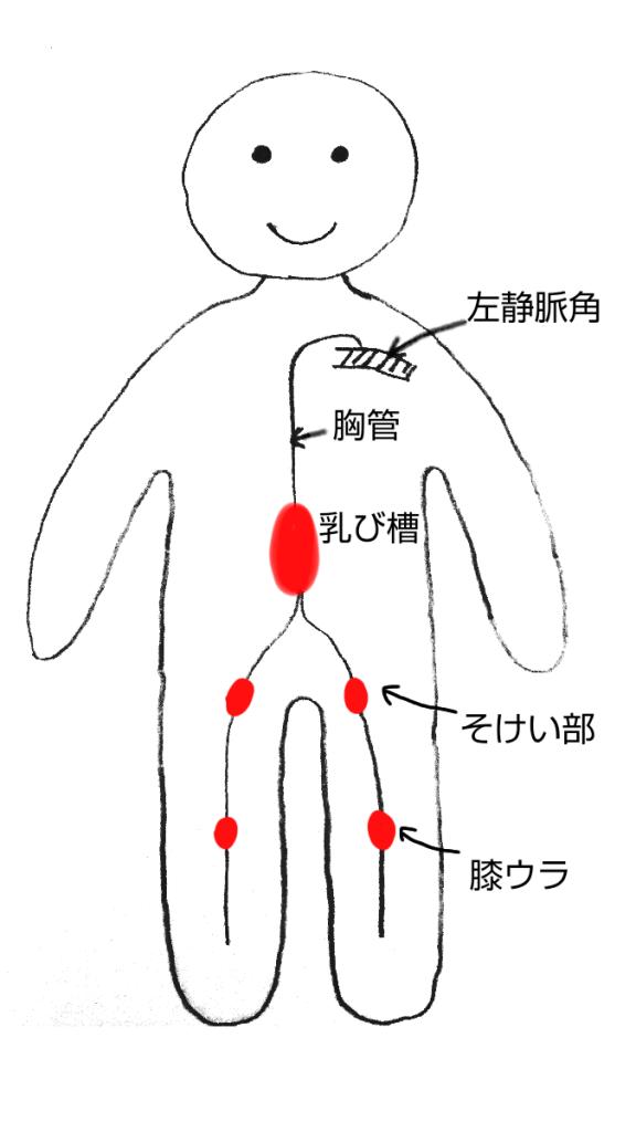 リンパ節そけい部と膝裏