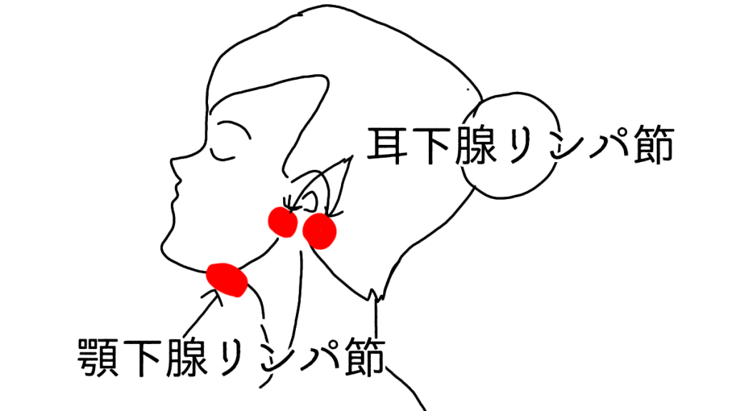 耳下腺リンパ節と顎下腺リンパ節