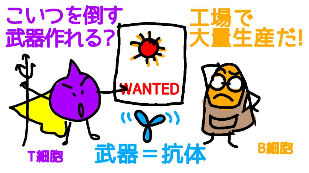 T細胞からB細胞に