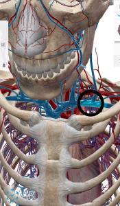 鎖骨下静脈